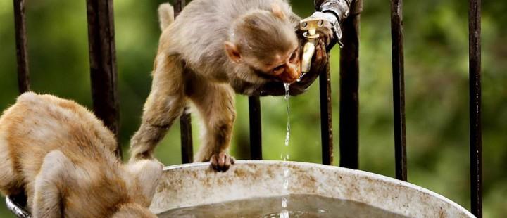 Macaquinhos tomando banho