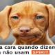 Cachorro Spirit