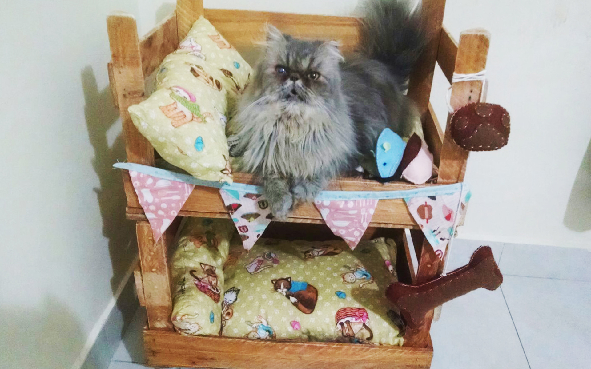 Beliche para gatos com caixotes