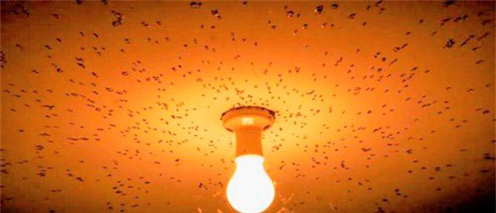 Lâmpada contra mosquito