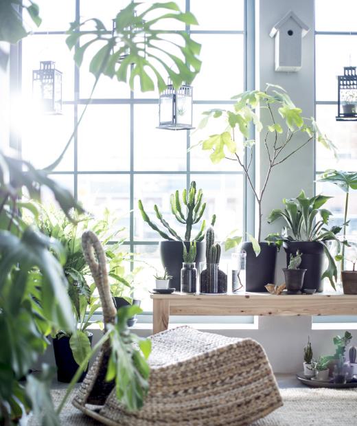 Ventilador de teto Spirit - Blog Myspirit - Plantas dentro de casa - relaxar a mente