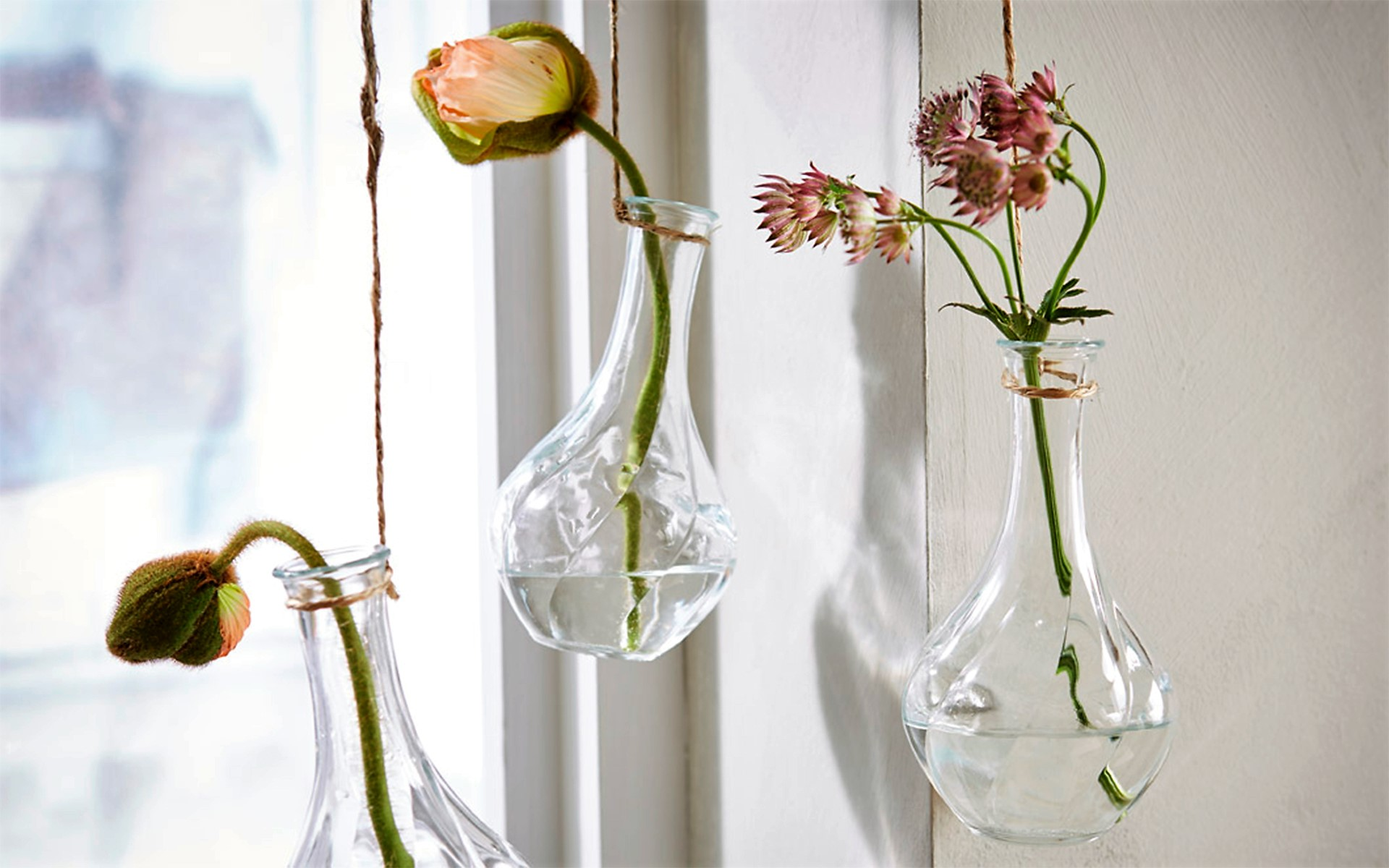 ventilador de teto Spirit - Blog Myspirit - capa blog - plantas dentro de casa