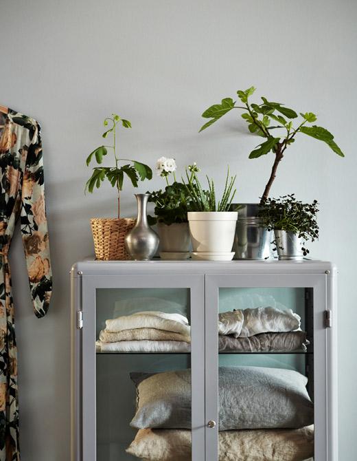 ventilador de teto Spirit - Blog Myspirit - plantas dentro de casa