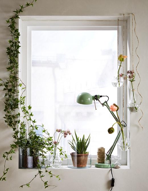 ventilador de teto Spirit - Blog Myspirit - plantas na janela - plantas dentro de casa