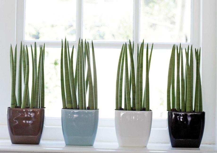 ventilador de teto Spirit - Blog Myspirit - plantas dentro de casa - como deixar a casa mais fresca