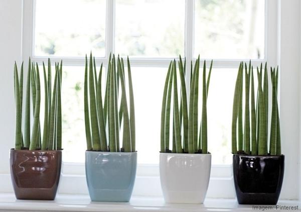 Ventiladores e luminárias Spirit - Blog Myspirit - plantas dentro de casa - como deixar a casa mais fresca