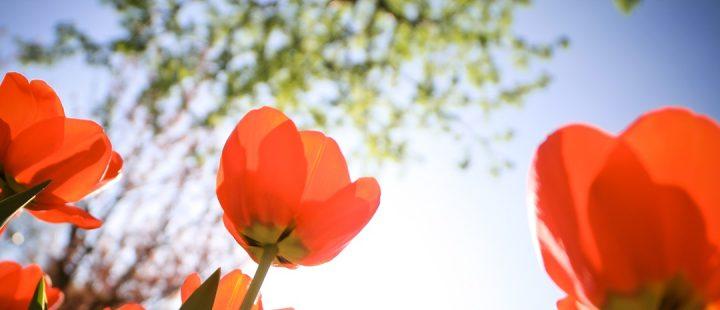 Ventiladores e luminárias Spirit - Blog Myspirit - flores - primavera